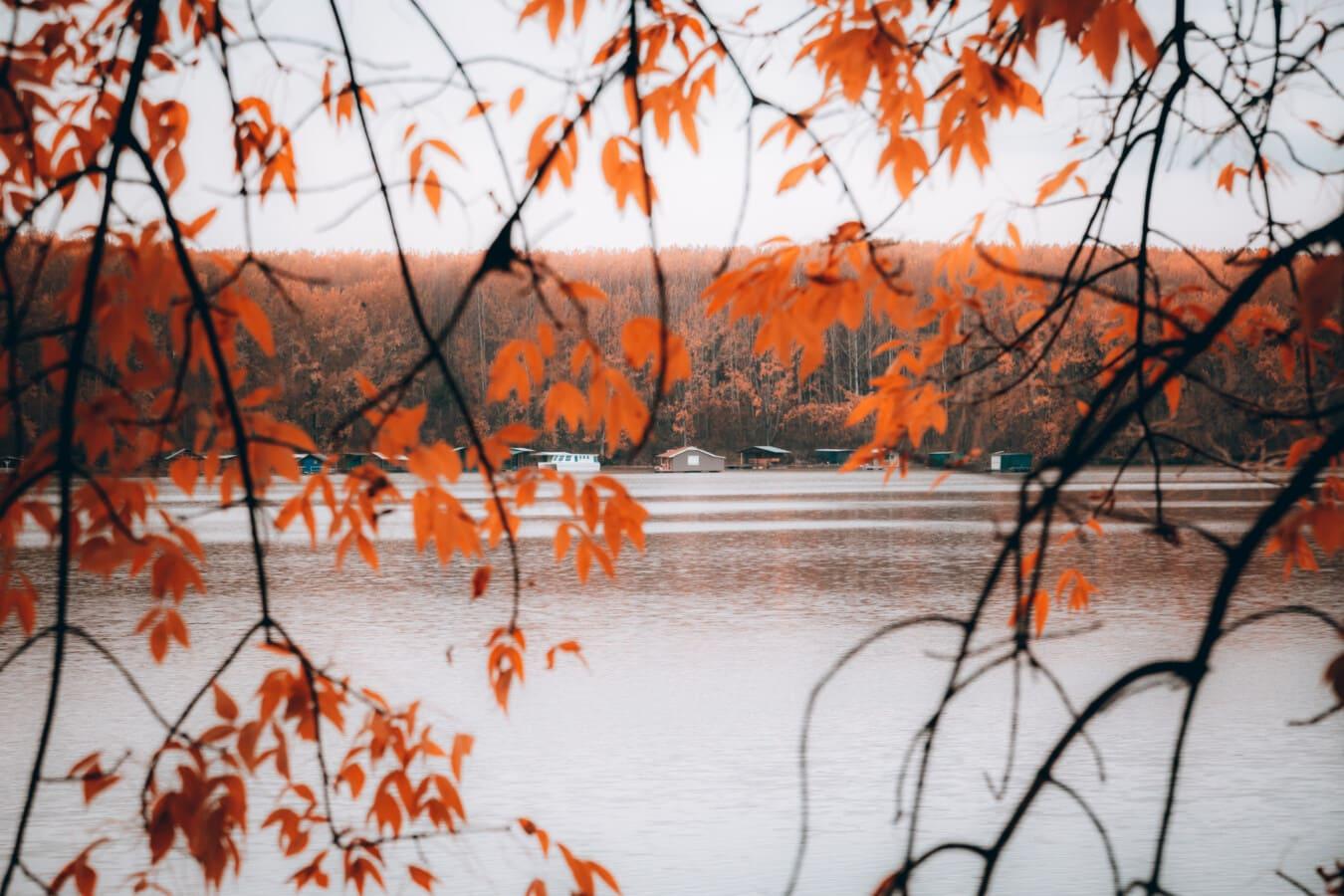 branches, autumn season, lakeside, resort area, boathouse, leaf, autumn, maple, tree, nature