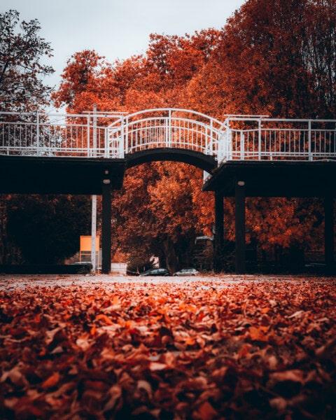 parco, vicolo, zona di villeggiatura, Ponte, stagione autunnale, area urbana, Via, albero, luce, legno