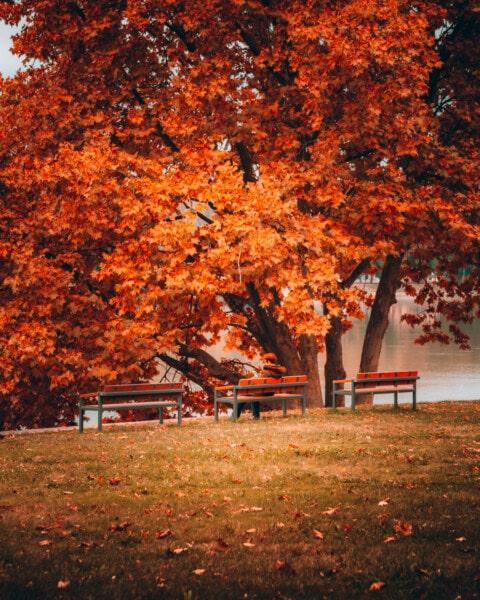το φθινόπωρο, πάρκο, ακροποταμιά, γκαζόν, δέντρα, πάγκος, συνεδρίαση, πρόσωπο, σφενδάμι, έπιπλα