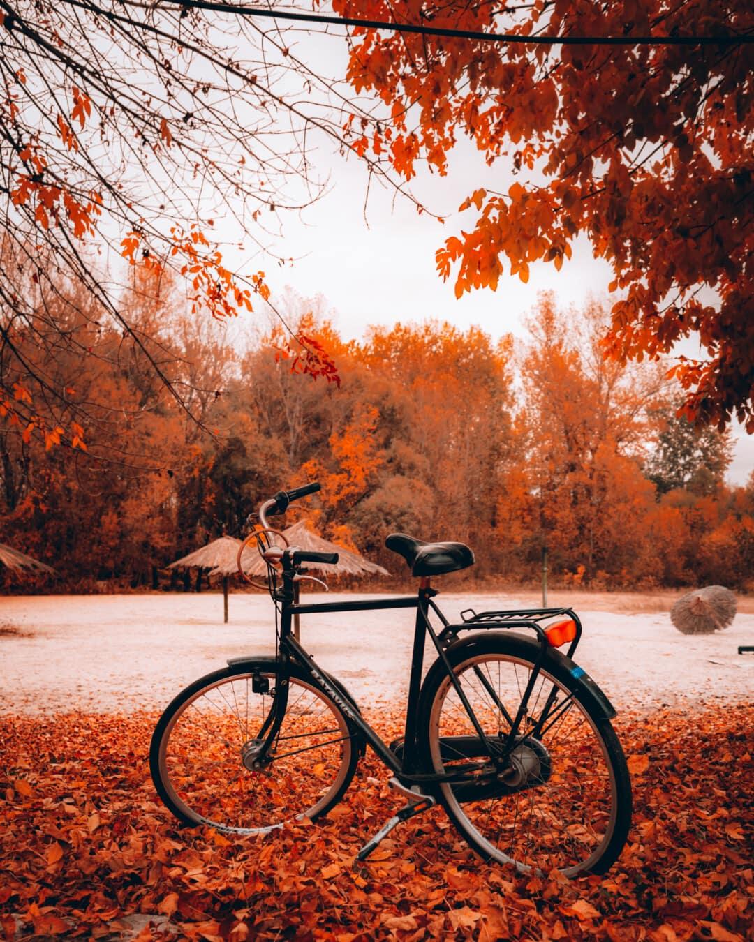 Fahrrad, Strand, Herbstsaison, Rad, Straße, Struktur, Holz, Park, Blatt, Farbe