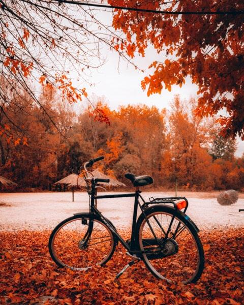 велосипедов, пляж, осенний сезон, колесо, дорога, дерево, дерево, парк, лист, цвет