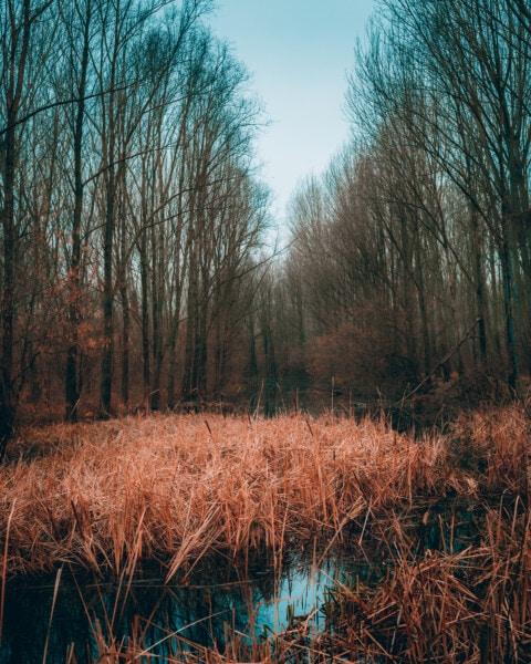 erdő, gyomok, ősz, mocsár, folyó, fa, táj, Hajnal, fa, természet
