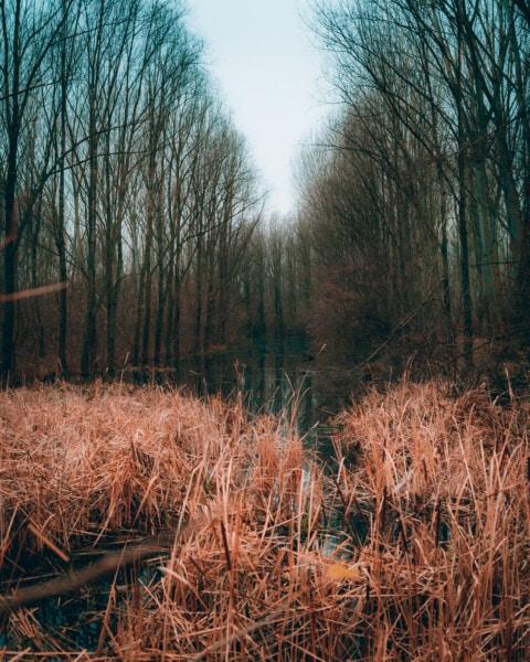 folyó, mocsarak, erdő, őszi szezon, ősz, természet, táj, fa, Hajnal, fa