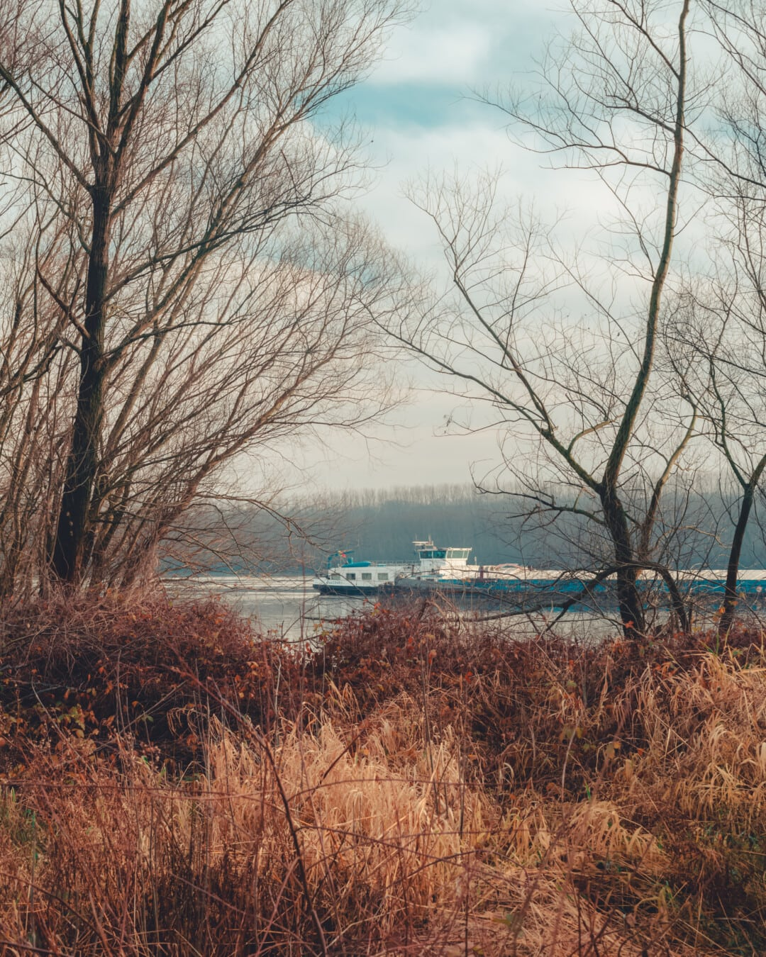 barge, autumn season, riverbank, cargo ship, foggy, trees, tree, landscape, nature, dawn