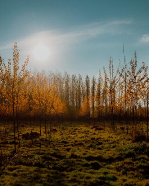 Sonnenschein, Sonne, Sonnenstrahlen, Herbstsaison, Wald, majestätisch, Atmosphäre, Ruhe, Dämmerung, Natur