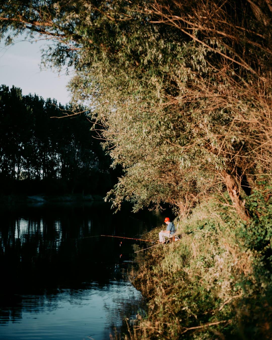 pêche, pêcheur, rivière, berge, canne à pêche, Lac, eau, forêt, arbres, arbre