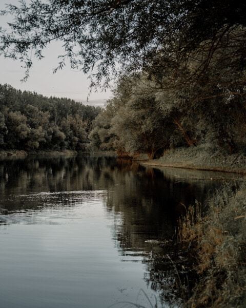 calm, river, trees, channel, forest, landscape, reflection, water, tree, nature