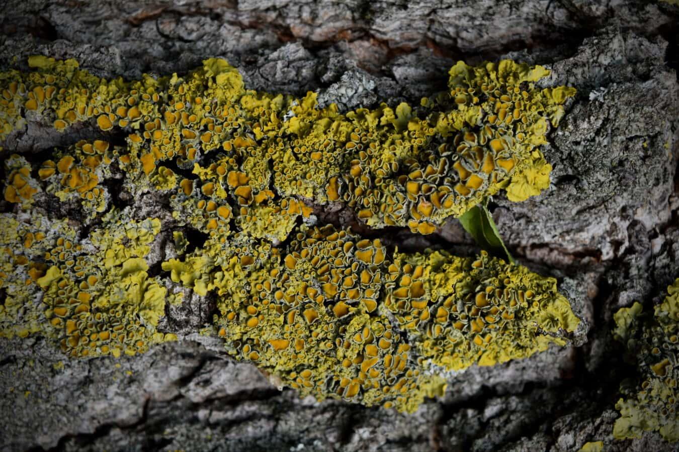 lichen, mousse, nature, champignon, texture, à l'extérieur, bois, Rough, écorce, fermer