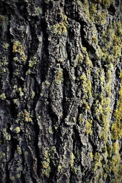 Kortex, moosig, Struktur, Borke, Textur, Flechten, Holz, Wald, Stamm, rau