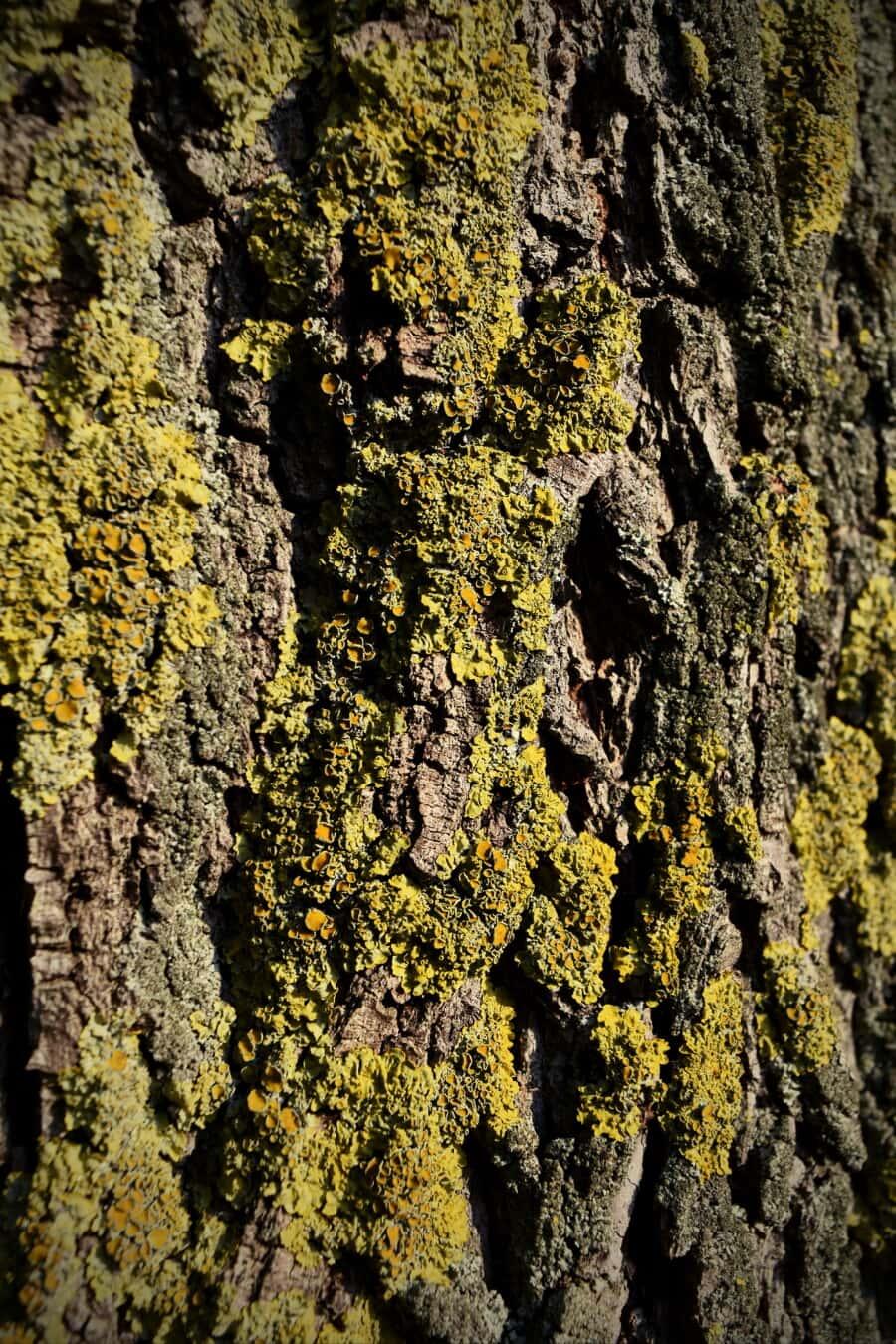mossy, tree, bark, lichen, texture, cortex, moss, wood, fungus, nature