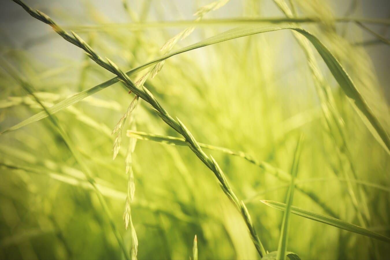 緑の葉, 間近, 草, 日当たりの良い, 太陽光線, 春の時間, 太陽の光, 春, 夏, 草原
