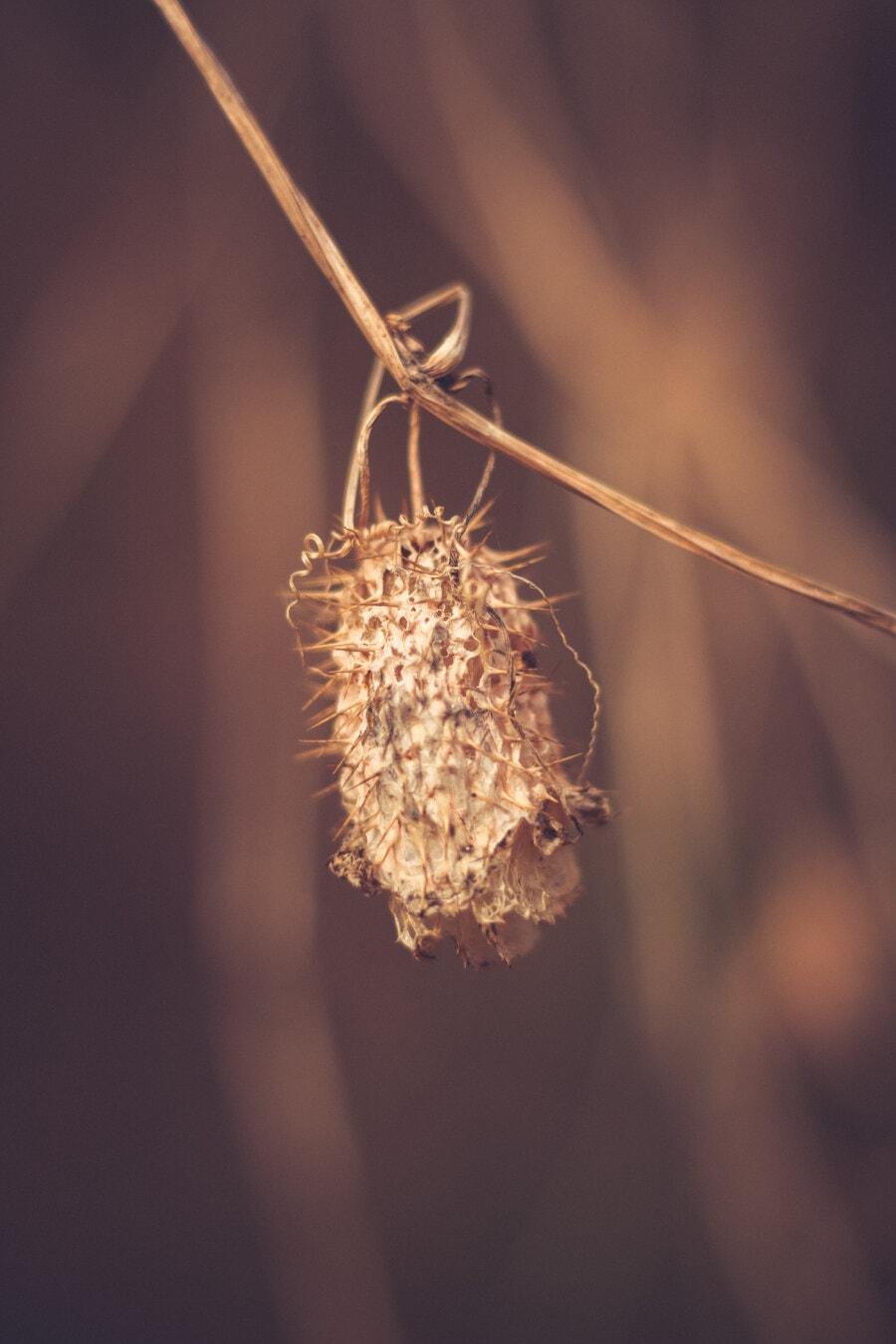 seminţe, iarbă, crenguţă, Sezonul secetos, până aproape, sepia, plante, vara, naturale, iarba