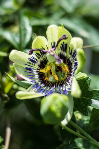 eksoottinen, sademetsä, kukat, kukka, emiö, siitepöly, trooppinen, kasvitieteen, lähietäisyydeltä, yksityiskohta