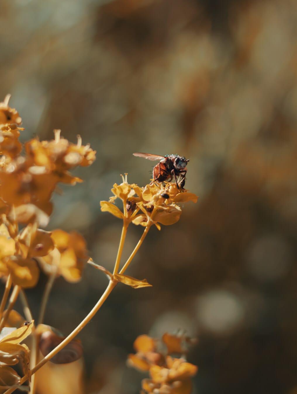 vinge, posas, insekt, kvist, sommarsäsongen, detaljer, detalj, djur, djur, biologi