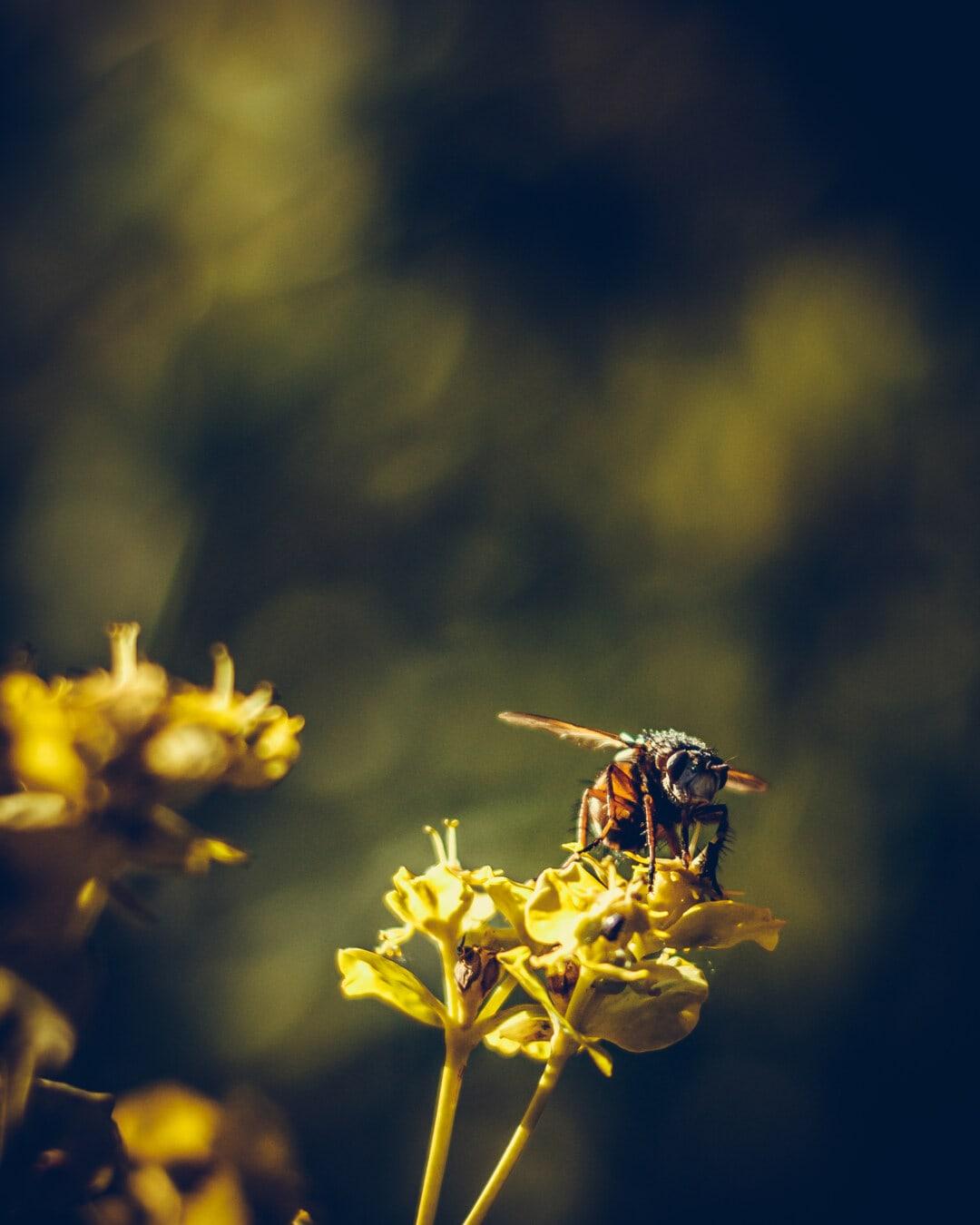 lähietäisyydeltä, pää, hyönteinen, siivet, verkkosiipiset, pensas, kasvi, kukka, kevät, kesällä