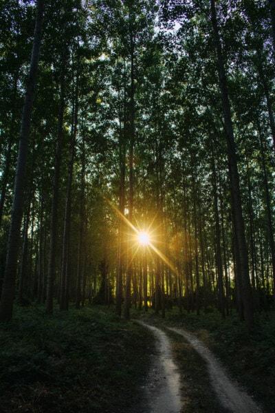 route forestière, rayons de soleil, lumière du soleil, rétro-éclairé, brillant, paysage, arbres, arbre, forêt, parc