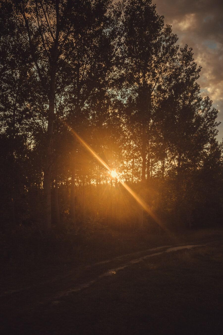Sonnenstrahlen, Sonnenlicht, Sonnenschein, sonnig, hinterleuchtet, Wald, Sonnenfleck, Sonnenuntergang, Sonne, Beleuchtung