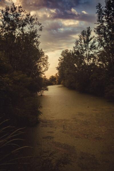 沼, 荒野, 川岸, 木, ランドス ケープ, ツリー, 木材, 夜明け, 太陽, サンセット