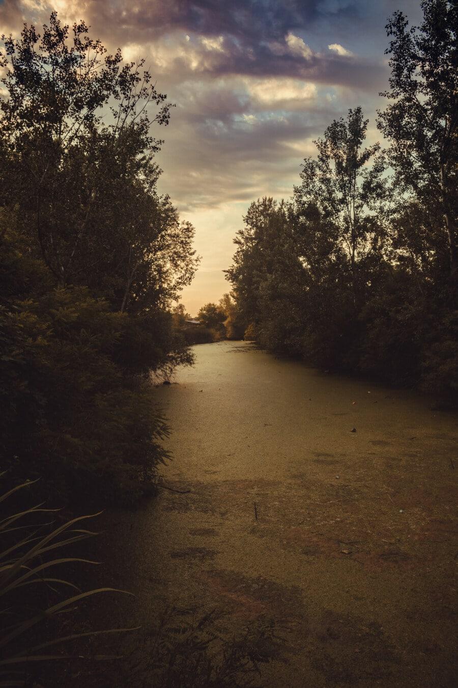 mocsár, vadonban, folyóparton, fák, táj, fa, fa, Hajnal, nap, naplemente