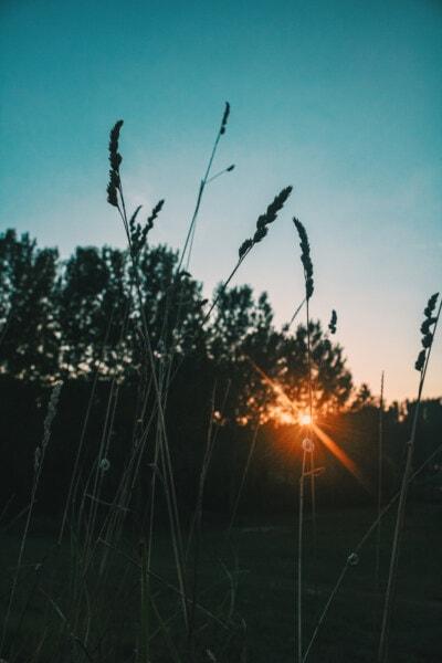太陽光線, 日光, 太陽, 自然, 夜明け, 草, ランドス ケープ, 夏, 公正な天気, サンセット