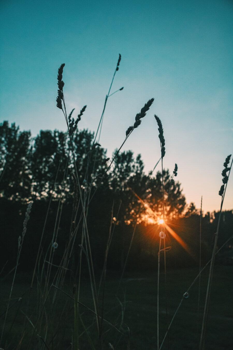 Sonnenstrahlen, Sonnenlicht, Sonne, Natur, Dämmerung, Gras, Landschaft, Sommer, Schönwetter, Sonnenuntergang