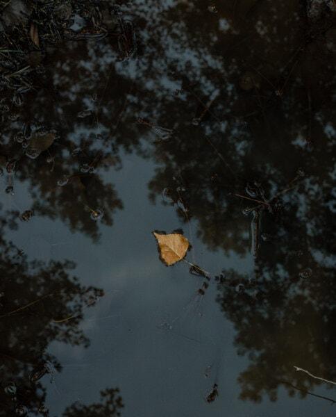 calme, réflexion, eau, flottant, brun jaunâtre, feuille, paysage, nature, sombre, aube