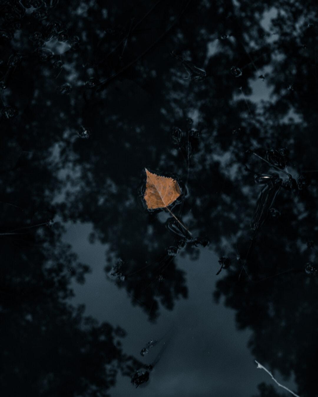 feuilles jaunes, sec, brun jaunâtre, flottant, eau, ténèbres, ombre, sombre, nature, Résumé