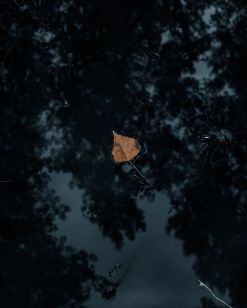 yellow leaves, dry, yellowish brown, floating, water, darkness, shadow, dark, nature, abstract