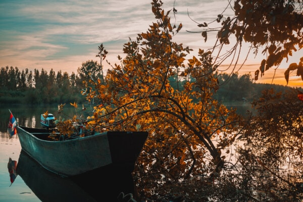 motorboat, river boat, boat, branches, trees, autumn season, landscape, autumn, forest, tree