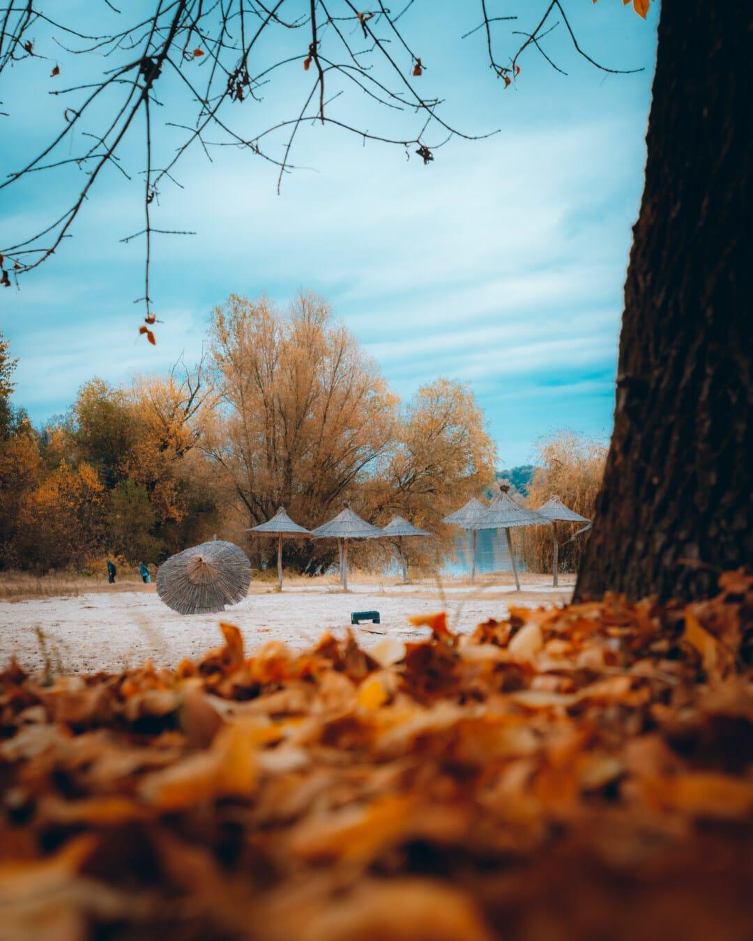 осенний сезон, пляж, зонтик, природа, дерево, пейзаж, лист, закат, рассвет, солнце