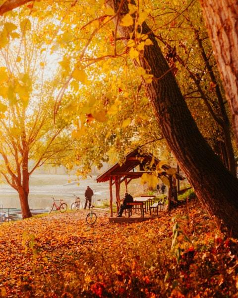 autumn season, sunshine, sunny, landscape, wood, yellow, leaf, forest, tree, autumn