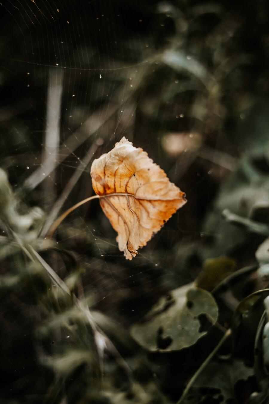 toile d'araignée, brun jaunâtre, feuilles jaunes, nature, belle, feuille, couleur, texture, flore, plante