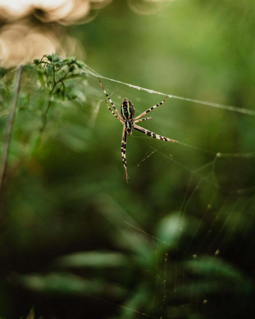 spider, spiderweb, close-up, wilderness, animal, green, insect, animals, blurry, detail