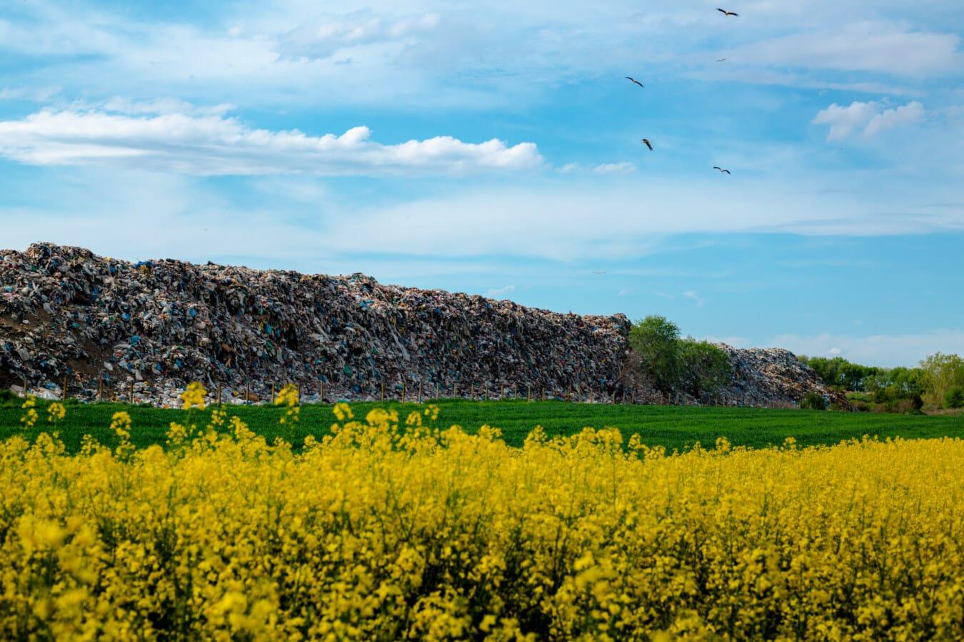 junkyard, garbage, garbage collection, junk, agricultural, field, rapeseed, landscape, nature, flower