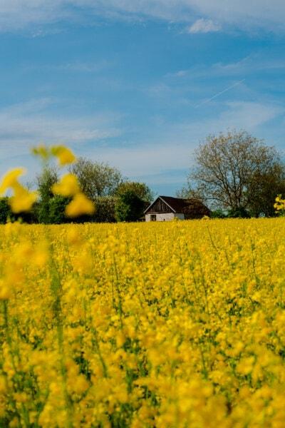 Ackerland, Bauernhaus, Raps, Frühling, des ländlichen Raums, Wiese, Feld, Landschaft, Landschaft, Natur