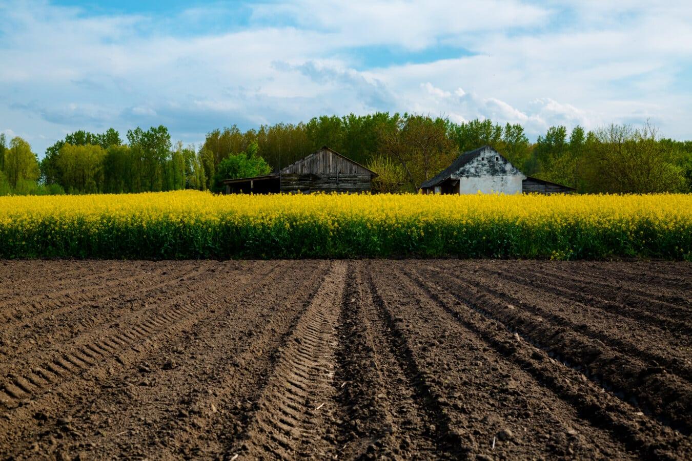 Agriculture, colza, rural, paysage, ferme, sol, domaine, sol, culture, nature