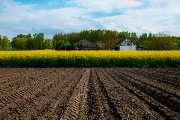 agriculture, rapeseed, rural, landscape, farm, soil, field, ground, crop, nature