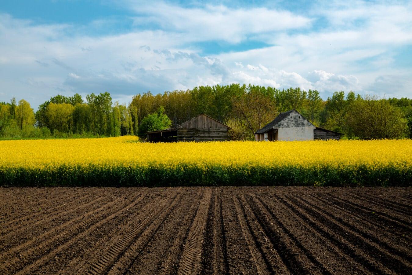 유채, 농업, 농지, 농장, 헛간, 필드, 농촌, 구조, 풍경, 토양