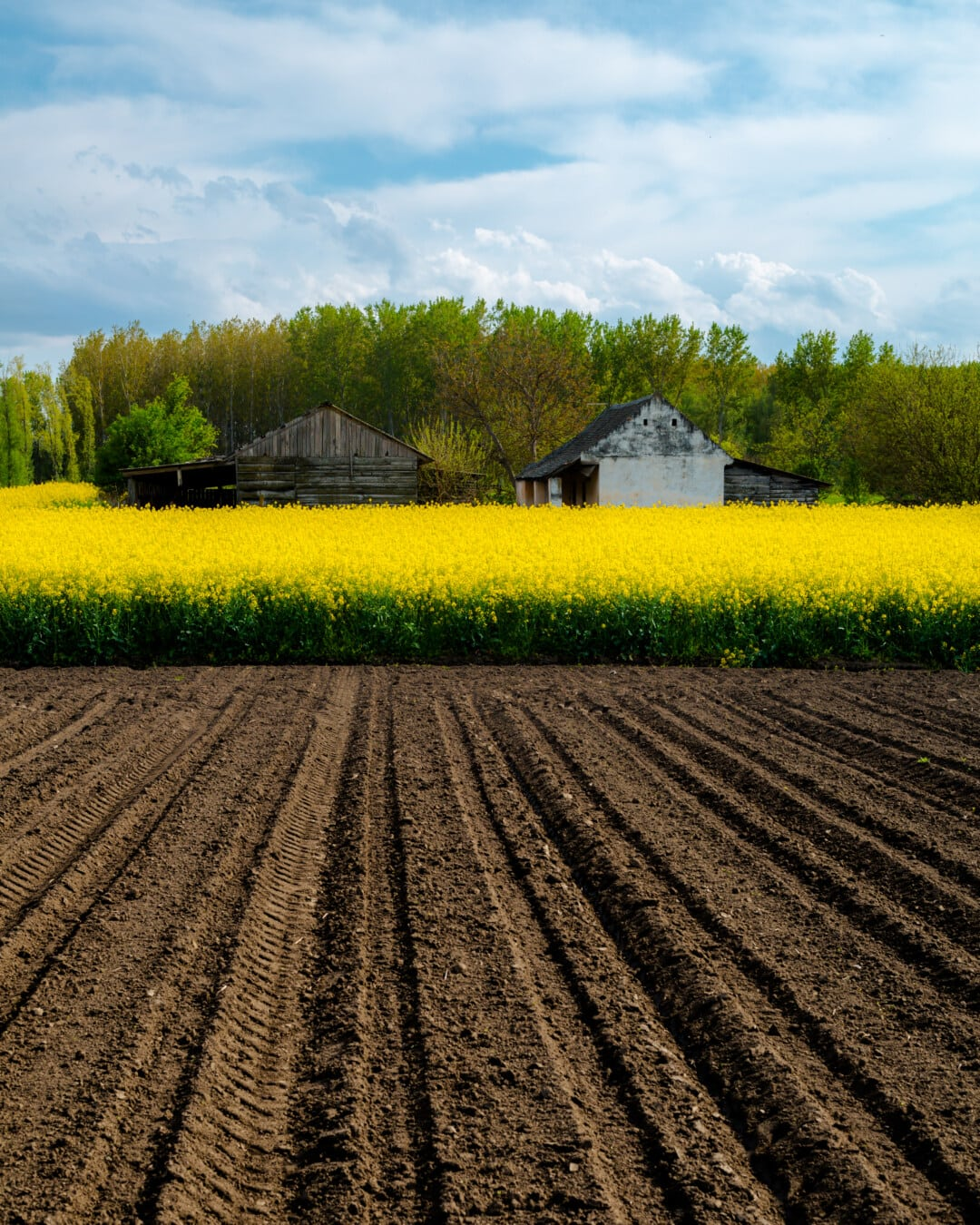 agricole, domaine, Agriculture, les terres agricoles, ferme, Agriculture, rural, ferme, paysage, colza