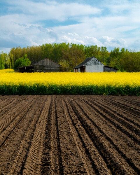 agricultural, field, farming, farmland, farmhouse, agriculture, rural, farm, landscape, rapeseed