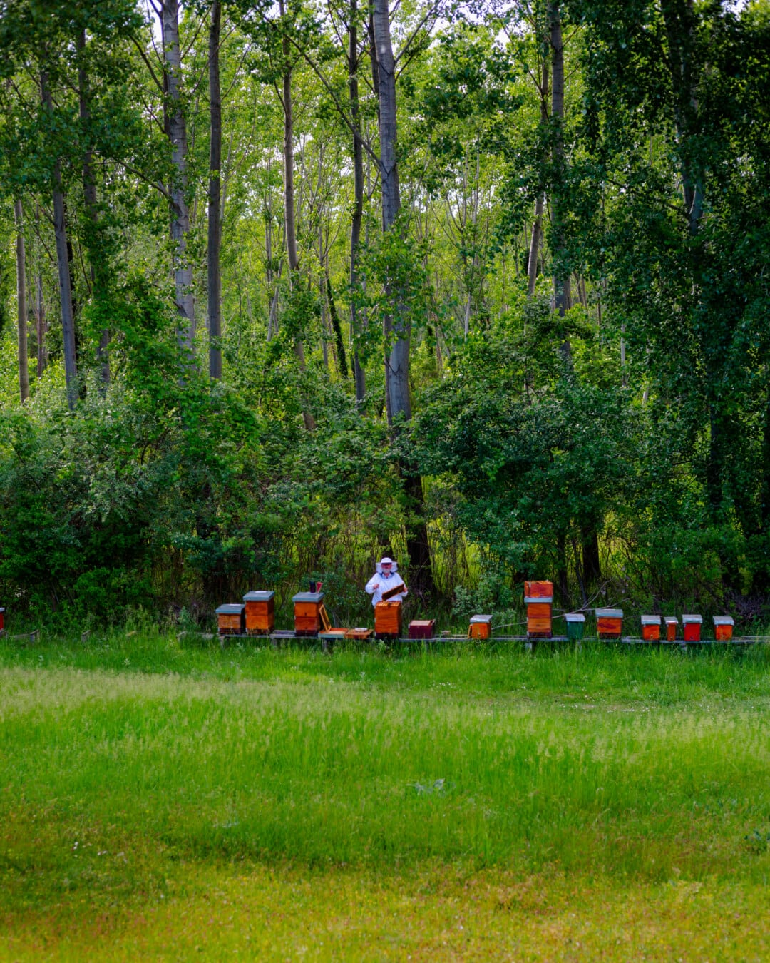 Bienenstock, Landwirt, Landwirtschaft, Wald, Struktur, Holz, Sommer, Natur, Landschaft, im freien