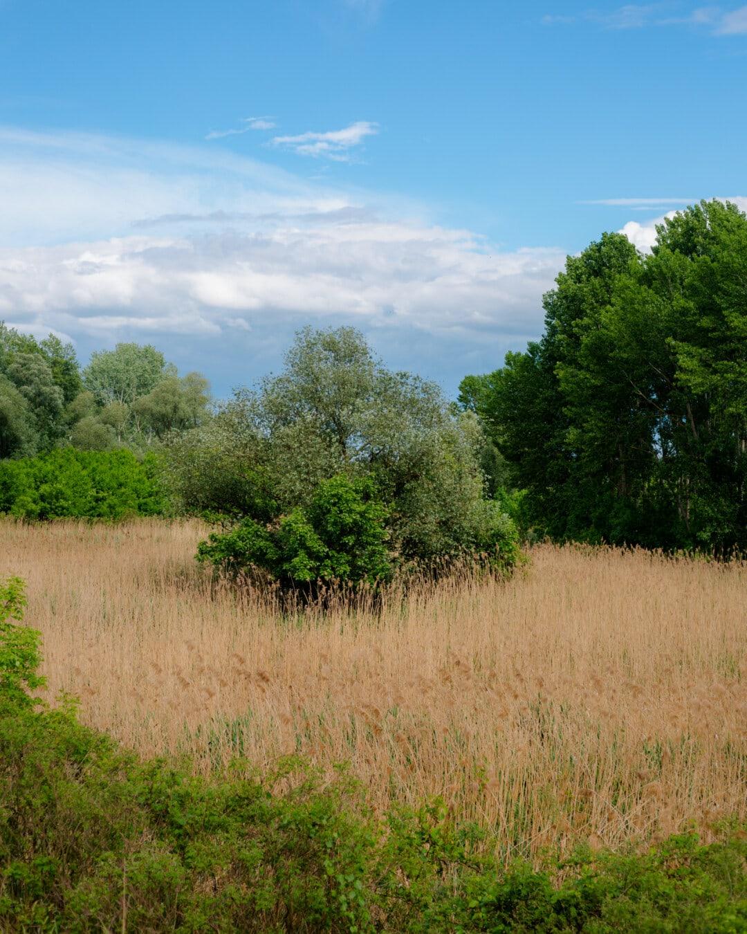 osuuden, metsä, luonto, maisema, ruoho, puu, kesällä, maan, maaseudun, kenttä