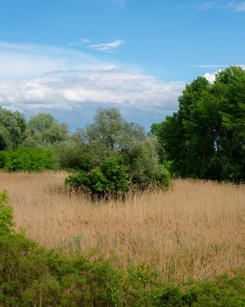 marskland, skov, natur, landskab, græs, træ, sommer, land, landdistrikter, felt