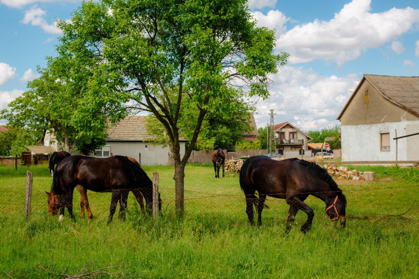 Weiden, Pferde, des ländlichen Raums, Hinterhof, Dorf, Bauernhof, Ranch, Gras, Stute, Pferd