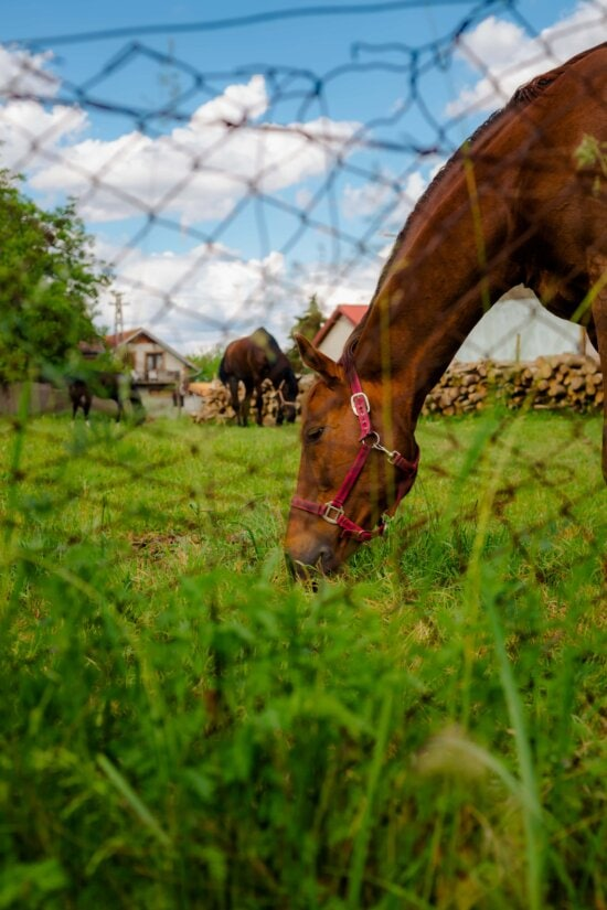horse, head, animal, grazing, fence, wires, grass, cavalry, nature, farm