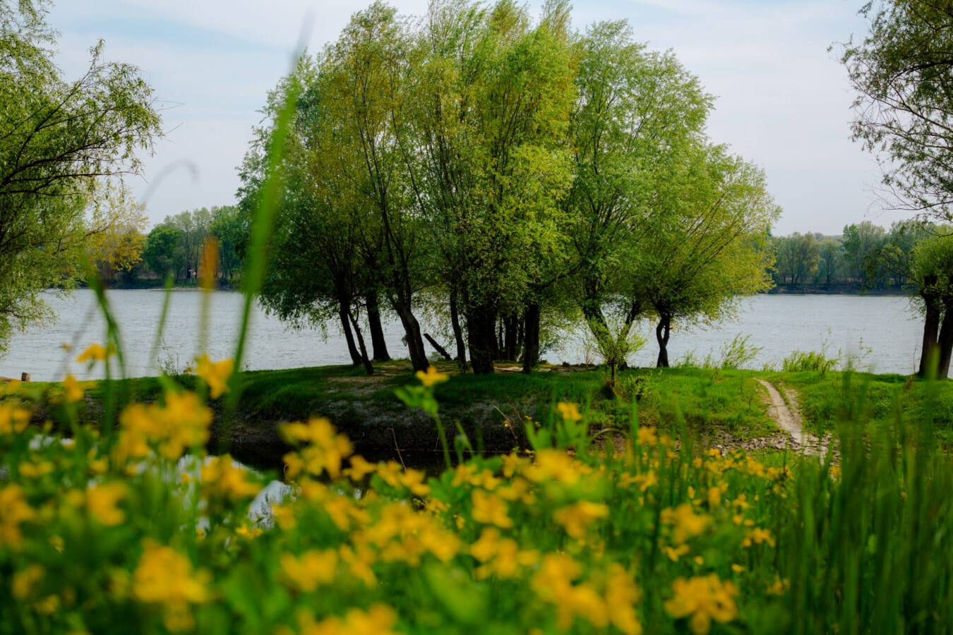 riverbank, river, plant, yellow, landscape, tree, nature, park, leaf, sun