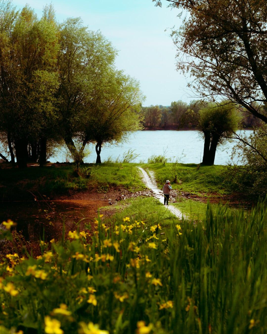 rural, paysage, herbe, arbre, aube, nature, Lac, feuille, eau, bois