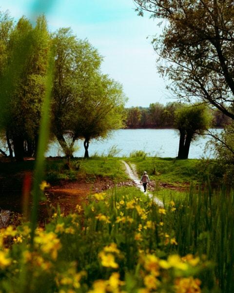 шлях, ходьба, людина, дерево, краєвид, завод, озеро, природа, світанок, лист