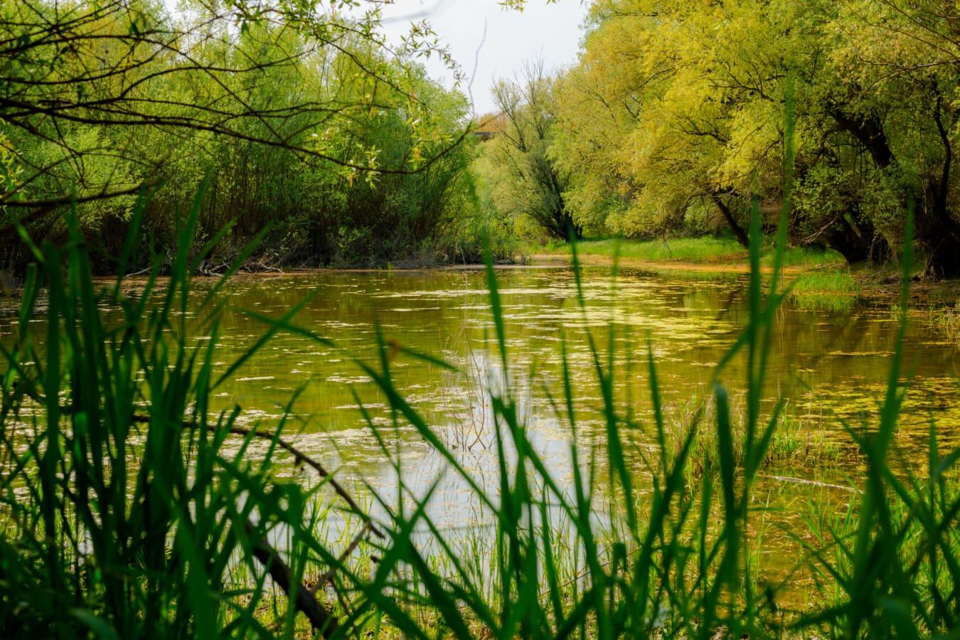 Struktur, Land, Wald, Landschaft, Feuchtgebiet, See, Sumpf, Wasser, Blatt, Natur
