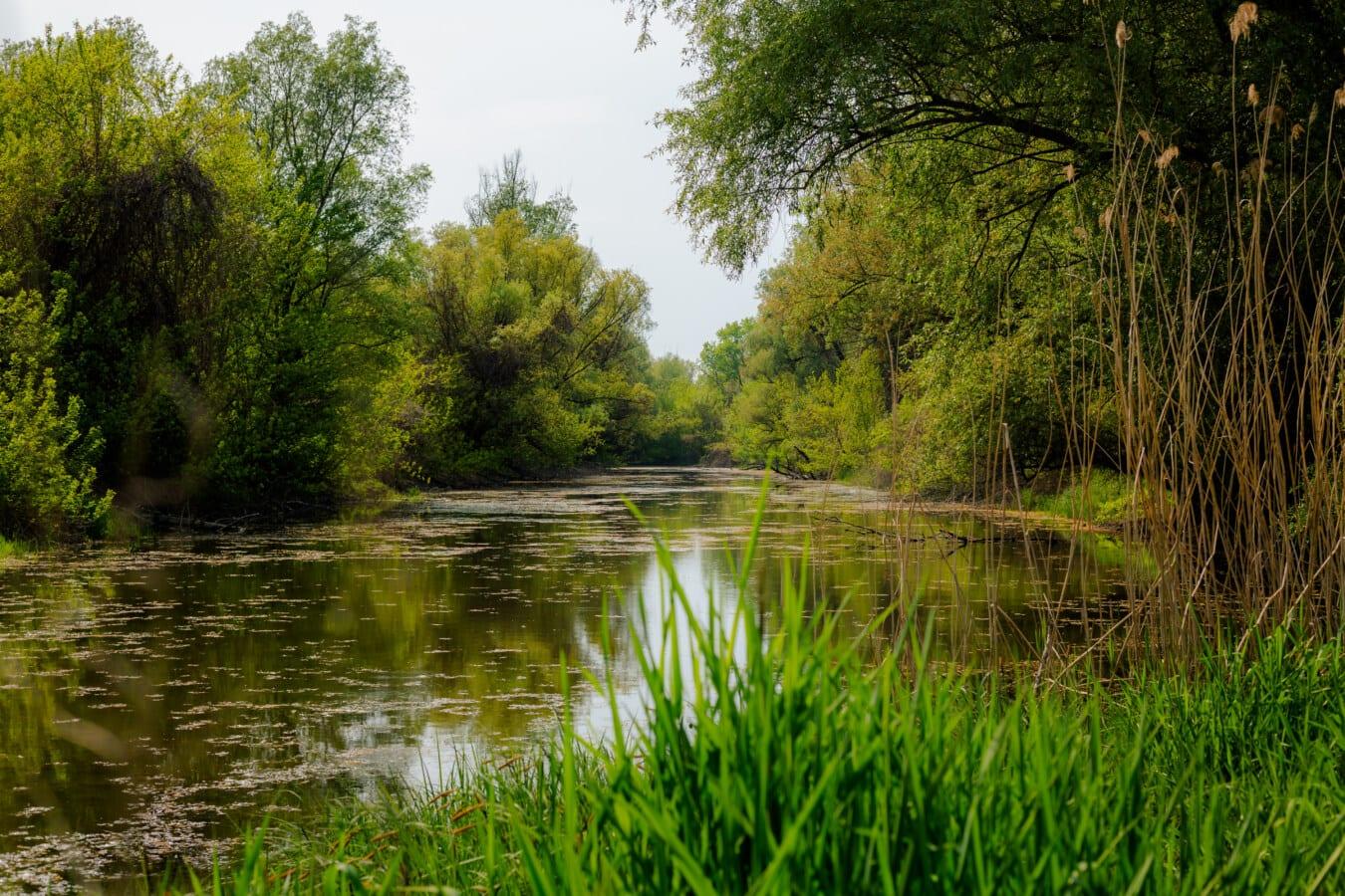 rustig, sfeer, rust, moerassen, lentetijd, moeras, landschap, wetland, reflectie, meer